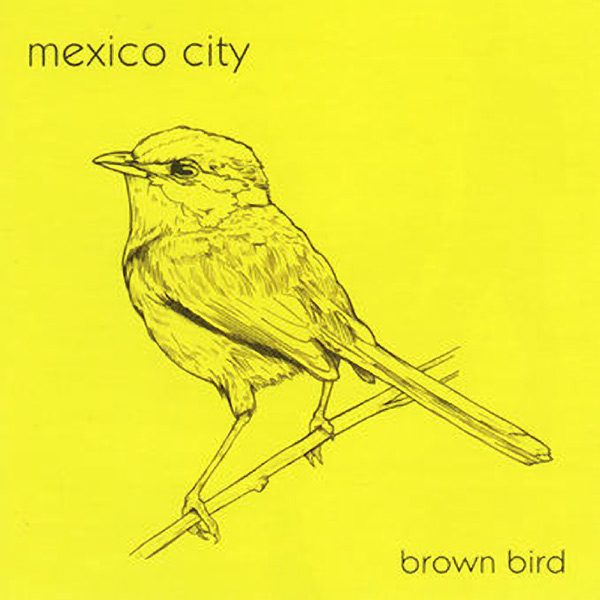 brown-bird